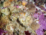 Mollusc and sponge community