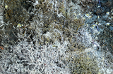 Dead tubeworms and limpets