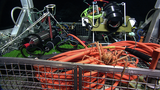 Spider crab on ROPOS