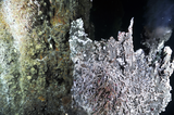 Hydrothermal vent and tubeworms