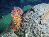 Coral on rock