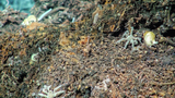 Gastropods, tubeworms, scaleworms